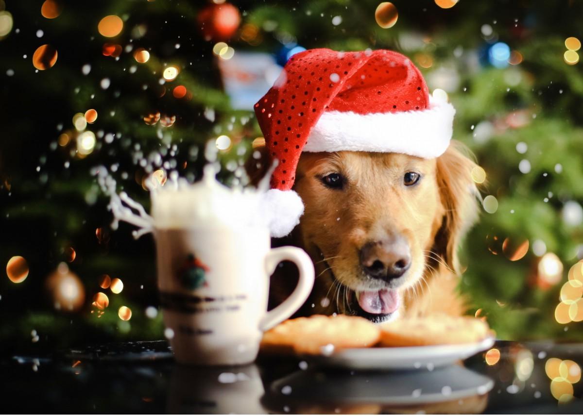Как встречать Новый год 2018  год Желтой Земляной Собаки